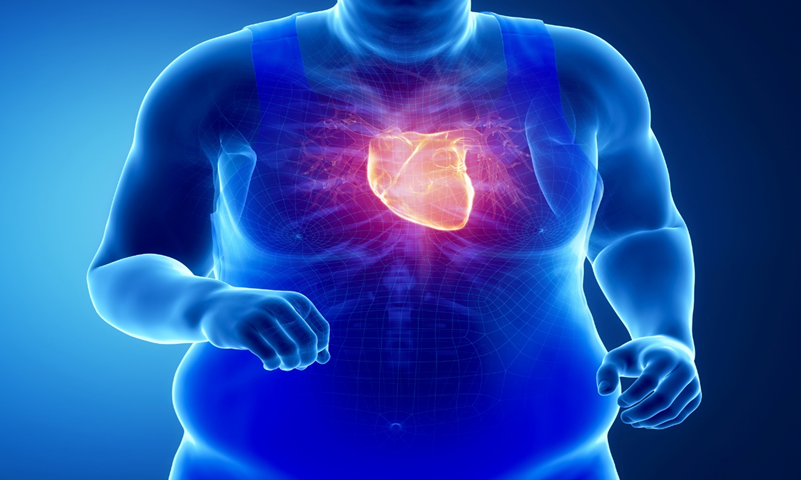 Does obesity impact the heart?